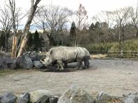Fuji Safari Park的封面