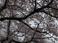 上野公园的封面