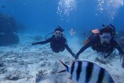 冲绳黑潮潜水