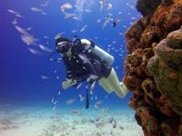Local Dive Thailand的封面
