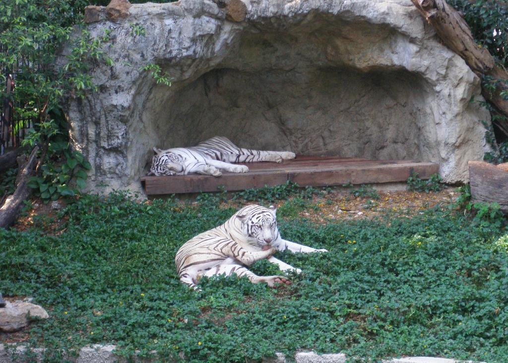 律实动物园的照片