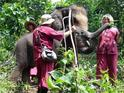 大象生态公园的封面