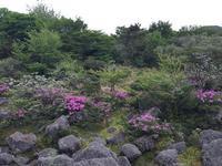 Jeju 1100 Altitude Wetland的封面