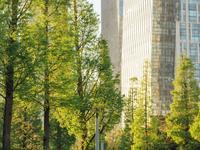 松岛中央公园的封面