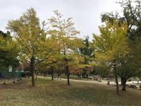 静冈城的封面