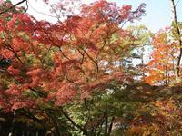 Miharashi Park (Kosetsuen)的封面