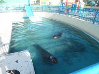 Wakkanai City Noshappu Aquarium的封面