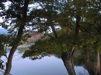 Ara Pond的封面