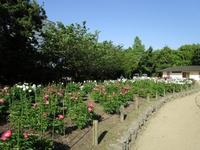 Maizuru Park Botan Shakuyaku Garden的封面