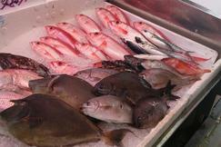 泊港鱼市场
