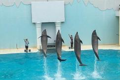 神户市立须磨海滨水族馆