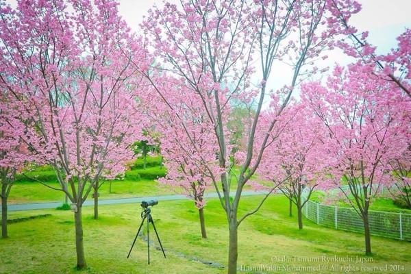 鹤见绿地花博纪念公园的照片