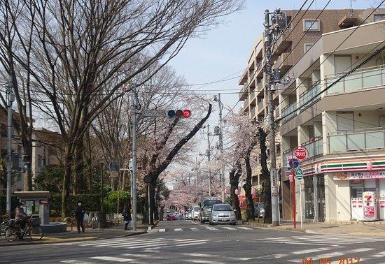 Matsudo City Cherry Blossom Festival