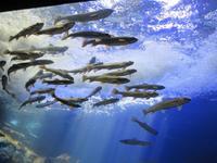 Yama no Aquarium的封面