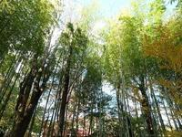 竹林小径的封面