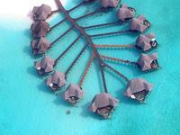 可可棕榈杜尼鲁的封面