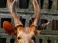 花鹿米民宿的封面