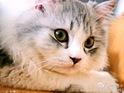 Cataholic-Cafe猫主题餐厅的封面