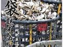 布袋渔港观光渔市的封面