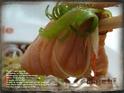 沙里仙虹鳟养殖场的封面