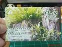 6号花园的封面
