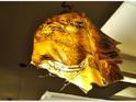 黄金传说自然食坊的封面