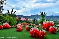 拜县草莓园
