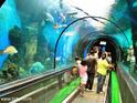 普吉水族馆的封面