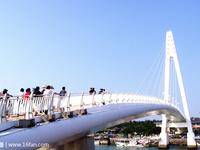 情人桥的封面