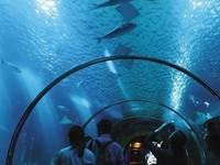 澎湖水族馆的封面