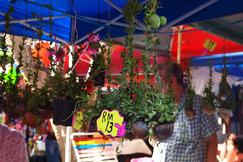 加雅街星期日市場
