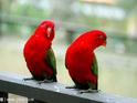 雀鸟公园 的封面