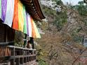 永观堂禅林寺的封面