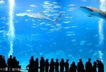 冲绳美之海水族馆的封面