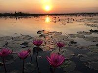 乌隆府红莲花池的封面