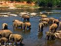 品纳维拉大象孤儿院的封面