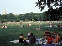 中央公园的封面