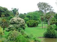 悉尼皇家植物园的封面