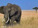 大象自然保护公园的封面