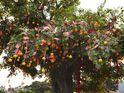 林村许愿树的封面