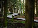 水自然休养林的封面