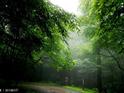 西归浦自然休养林的封面