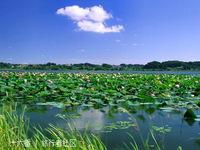 昭阳湖的封面
