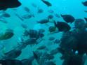 西归浦潜水艇 的封面