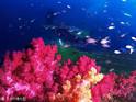 济州马罗岛潜水艇的封面