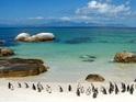 企鹅海滩的封面