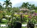 巴厘岛兰花园的封面