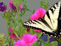 蝴蝶公园的封面