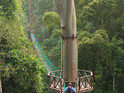 马来西亚森林研究局的封面