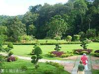 槟城植物园的封面